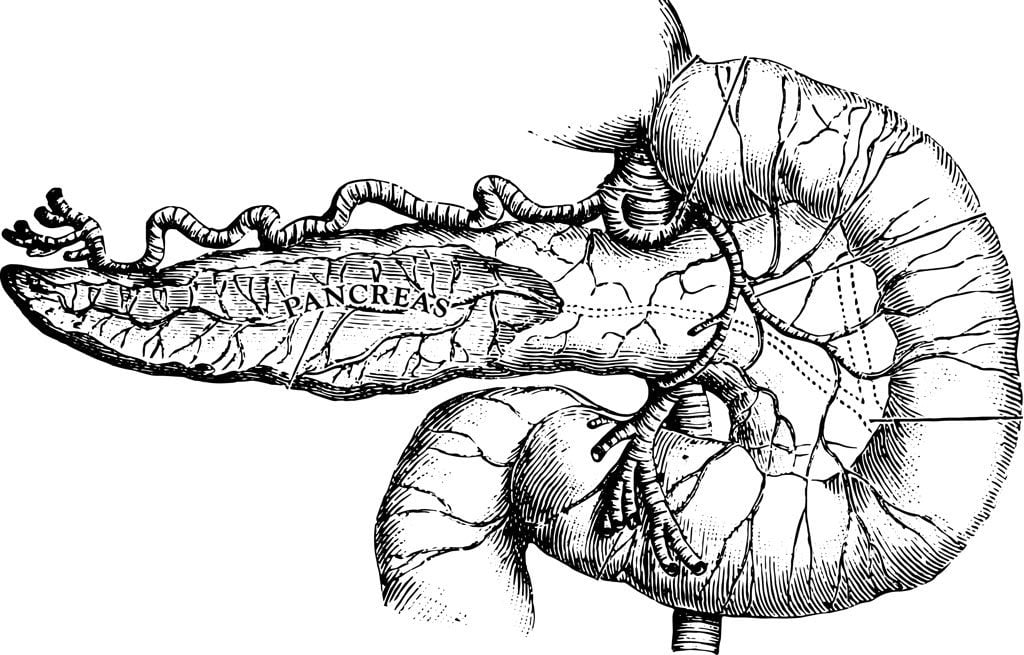engraving illustration of pancreas